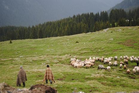 Pasterze